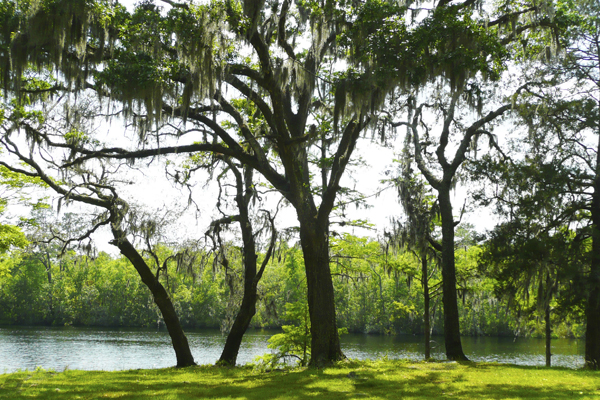 photo of trees by lake